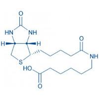 Biotinyl-Ahx-OH