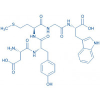 Cholecystokinin Octapeptide (1-5) (desulfated) H-Asp-Tyr-Met-Gly-Trp-OH