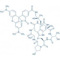 ((R)-4-Hydroxy-4-methyl-Orn(5-TAMRA)⁷)-Phalloidin Cyclo(-Ala-D-Thr-Cys-cis-Hyp-Ala-Trp-(4R)-4-hydroxy-4-Me-Orn(5-TAMRA))(Sulfide bond between Cys and indol-2-yl)