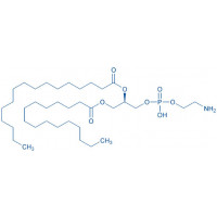 1,2-Dipalmitoyl-sn-glycero-3-phosphoethanolamine