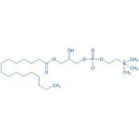 1-Palmitoyl-rac-glycero-3-phosphocholine