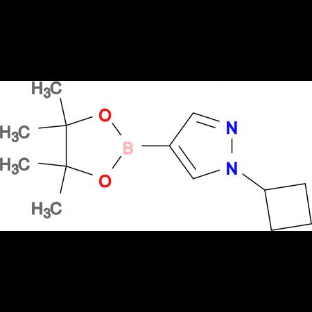1-Cyclobutyl-4-(4,4,5,5-tetramethyl-1,3,2-dioxaborolan-2-yl)-1H-pyrazole