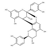 Procyanidin A1