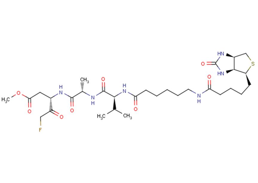 Biotin-VAD-FMK
